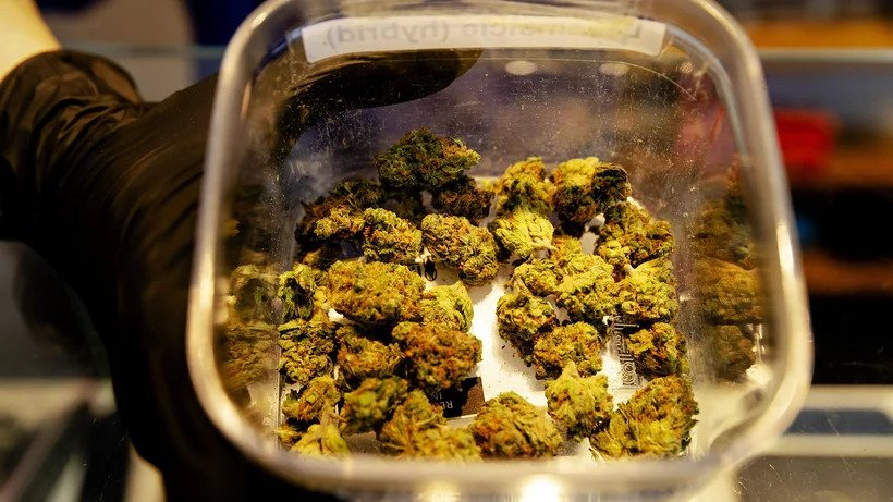 [Bild: cannabis_staat.jpg]